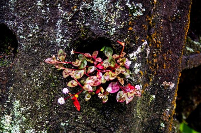 1 Ferrugem e flores Ppiacaba Nikon (3) 16Set18-1