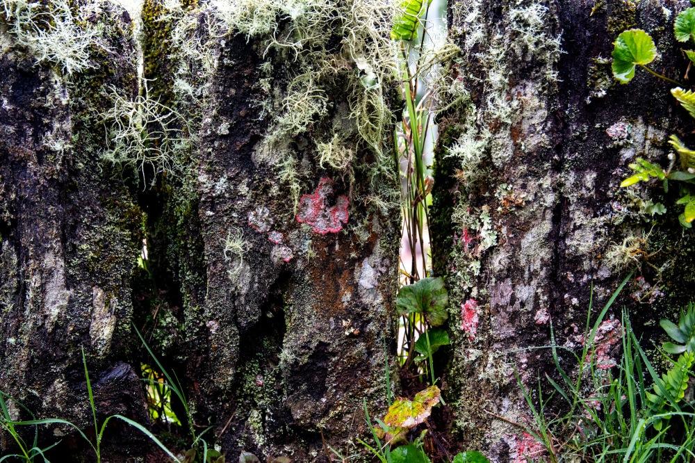 3 Ferrugem e flores Ppiacaba Nikon (10) 16Set18-1