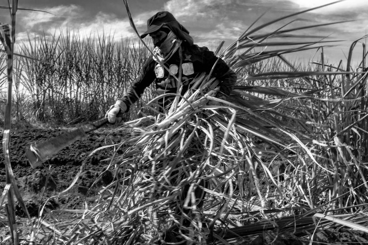 7 Plantadores de cana Usina Ipiranga (9) 14Abr2018-1