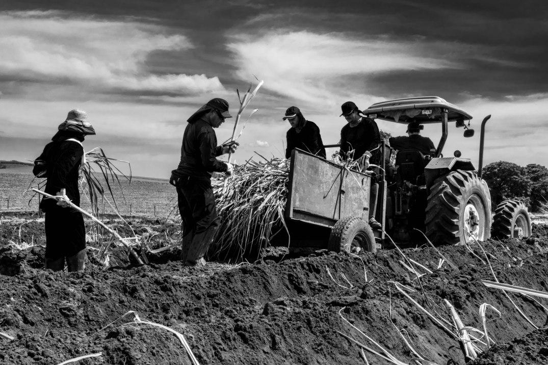 8 Plantadores de cana Usina Ipiranga (2) 14Abr2018-1