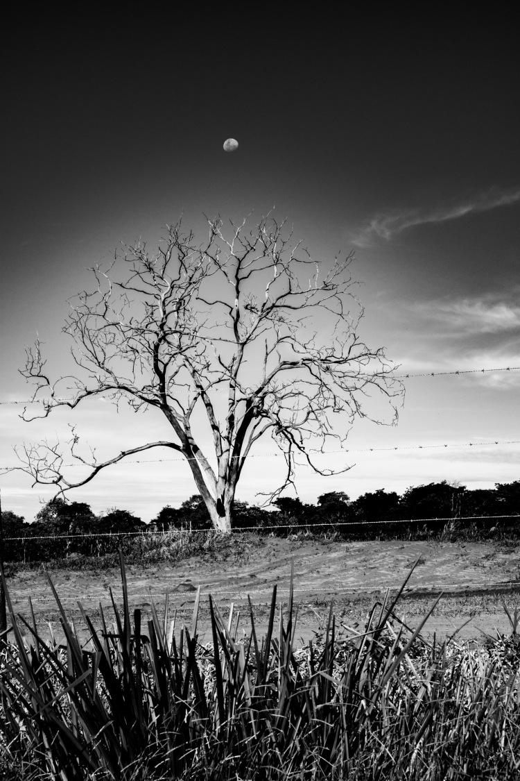 3 dead tree estrada ribeirao (17) 17jan19-1