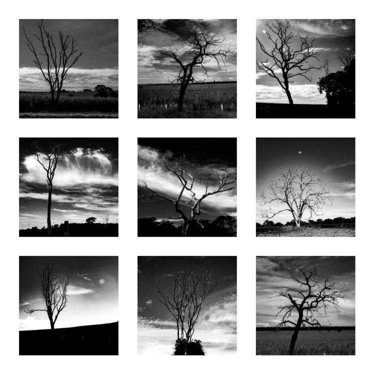8 collage arvores mortas em pe