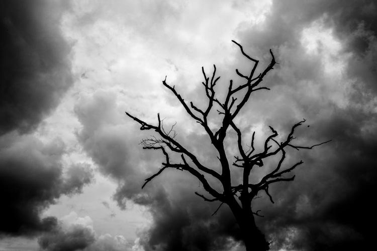 dead tree (2) jan19-1