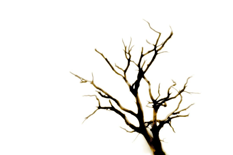 dead tree (3) jan19-1