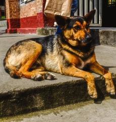 Dog Ppiacaba Set18-1