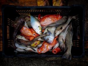 Fishes Garopaba Jan2019