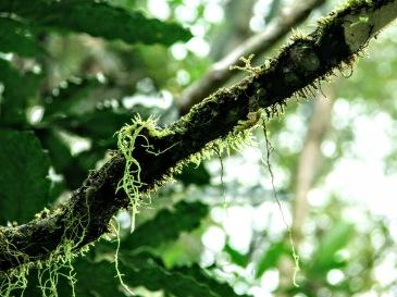 Há muitas formas de vida na natureza. Morretes, PR Set2005