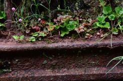 Paranapiacaba Life from Rust 18Set18b