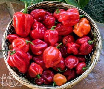 Pimentas do Jardim (2)
