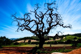 Zona Rural Carmo Rio Claro (2) 31jan19-1