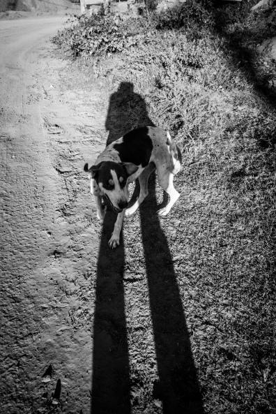 Autorretrato e Cachorro. Paracatu de Baixo. Mariana, MG 03_06Ago16