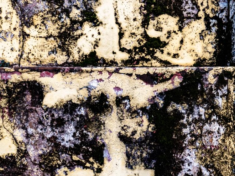 Colors & Textures (61) Sanca 05Mar19 (1 of 1)